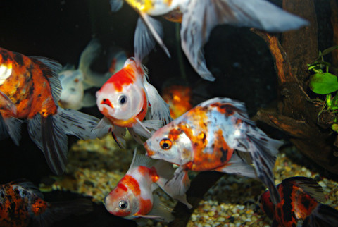 What you need to know to have a successful fishtank or pond!