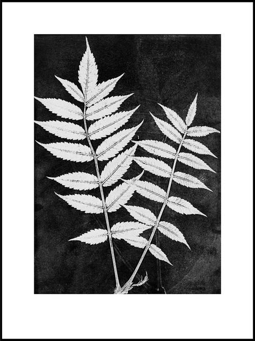 "Limited edition - Scandinavian Print - Sumac White - Black & White - 12"" x 16"""