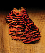 Complete Natural Golden Pheasant Tippet