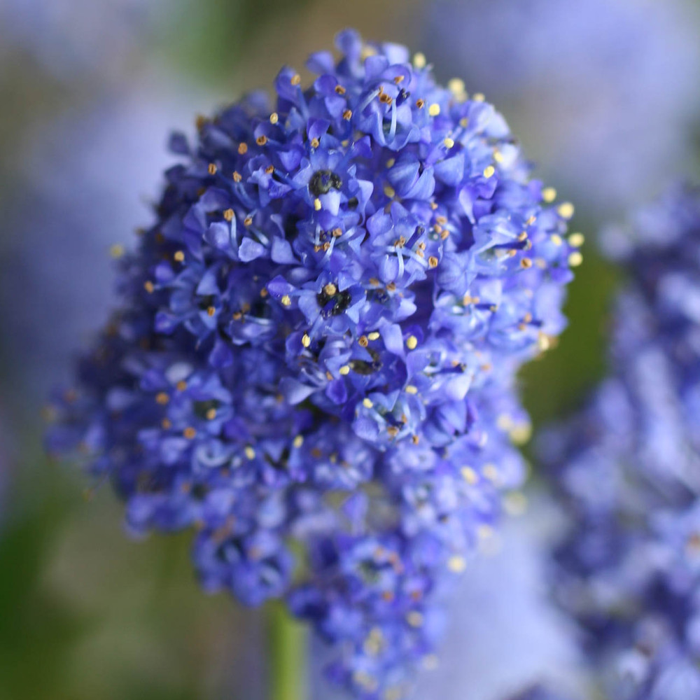 RADIATING LOVE AND JOY Organic Flower Essence Blend