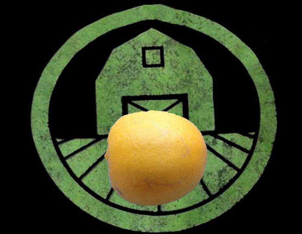 meyer lemon planting instructions