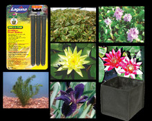 Large Pond Plant Collection