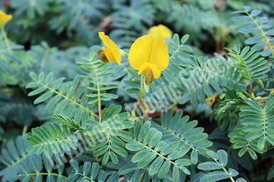 sensitive plant care instructions
