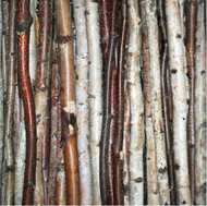 Birch Stick Packs
