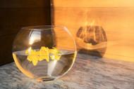 "Glass Flat Envelope Vase 6"" High  (12 Per Case)"