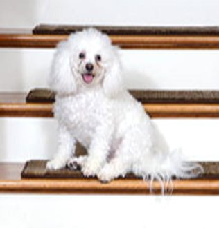 Order Custom Stair Treads And Runner Rugs For Your Home By Calling  1 800 616 8808 Today.