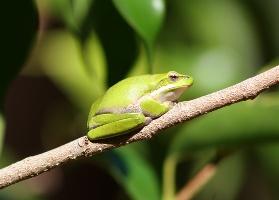 tree-frog-1.jpg