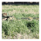 Ghillie Blind Camo Netting - Woodland Field
