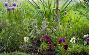 gardenherbs.jpg
