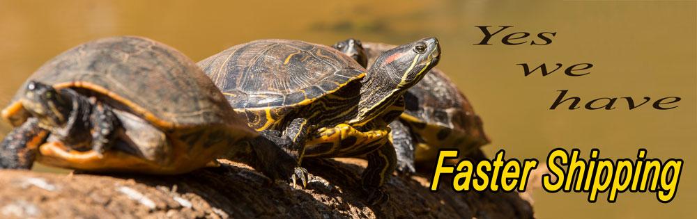 turtles-gallery.jpg