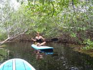 Mangrove Tours (SUP - Kayak)