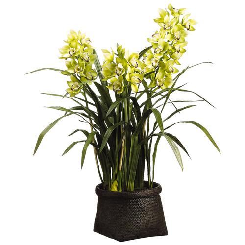"Cymbidium Orchid in Woven Basket 42"""