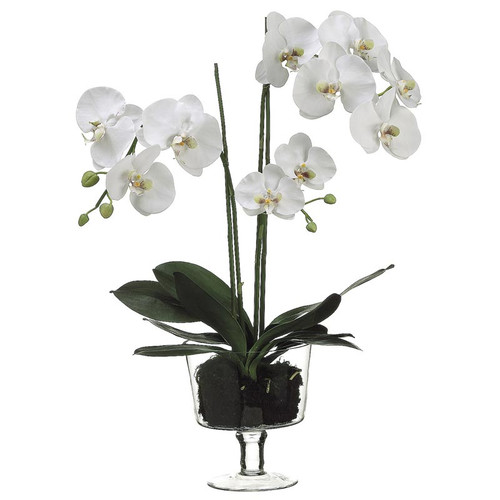 White Orchid in Glass Vase 29""