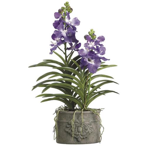 """Vanda Orchid in Cement Pot 35"""""""