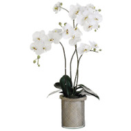 White Orchid in Basket Lined Glass