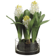 Hyacinth in Glass Vase 16""