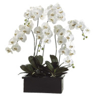 Orchid Plant in Terra Cotta Pot 42""