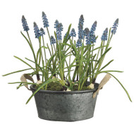 Grape Hyacinth in Tin Pot 16""
