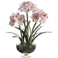Amaryllis w/Bulb in Glass Vase 29""