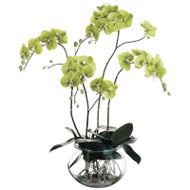 Green Orchid Plant in Glass Vase