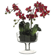Phalaenopsis Orchid in Glass Vase 17""