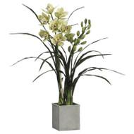 "Cymbidium Orchid in Clay Pot 40"""