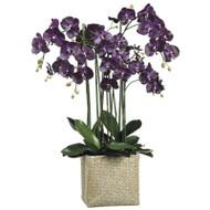 """Phalaenopsis Orchid in Basket 45"""""""