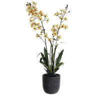 Oncidium Orchid in Cement Pot 40""