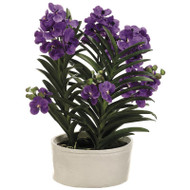 Vanda Orchid in Terra Cotta Pot 30""