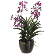 Vanda Orchid in Ceramic Pot Orchid 30""