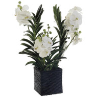 Vanda Orchid in Basket 32""