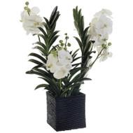 "Vanda Orchid in Basket 32"""