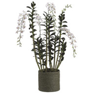 Dendrobium Orchid in Basket 59""