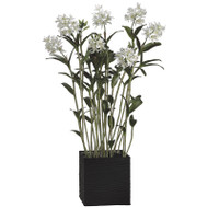 """Cattleya Orchid in Basket 69"""""""