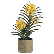 "Vanda Orchid in Sisal Pot 31"""