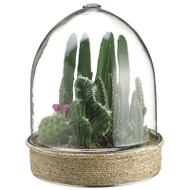 """Mixed Cactus in Glass Terrarium 15"""""""