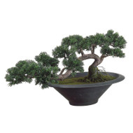 Trailing Cedar Bonsai Tree in Pot