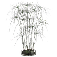 Papyrus Grass in Glass Vase