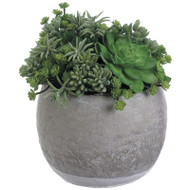 Succulent Garden in Terra Cotta Pot 11.5""
