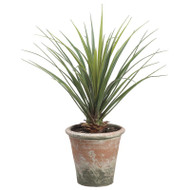Yucca Plant in Clay Pot 26.5""
