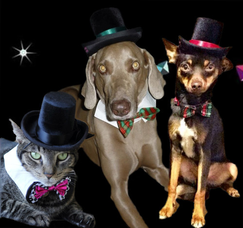 The Aristocrat Top Hat for dogs and cats