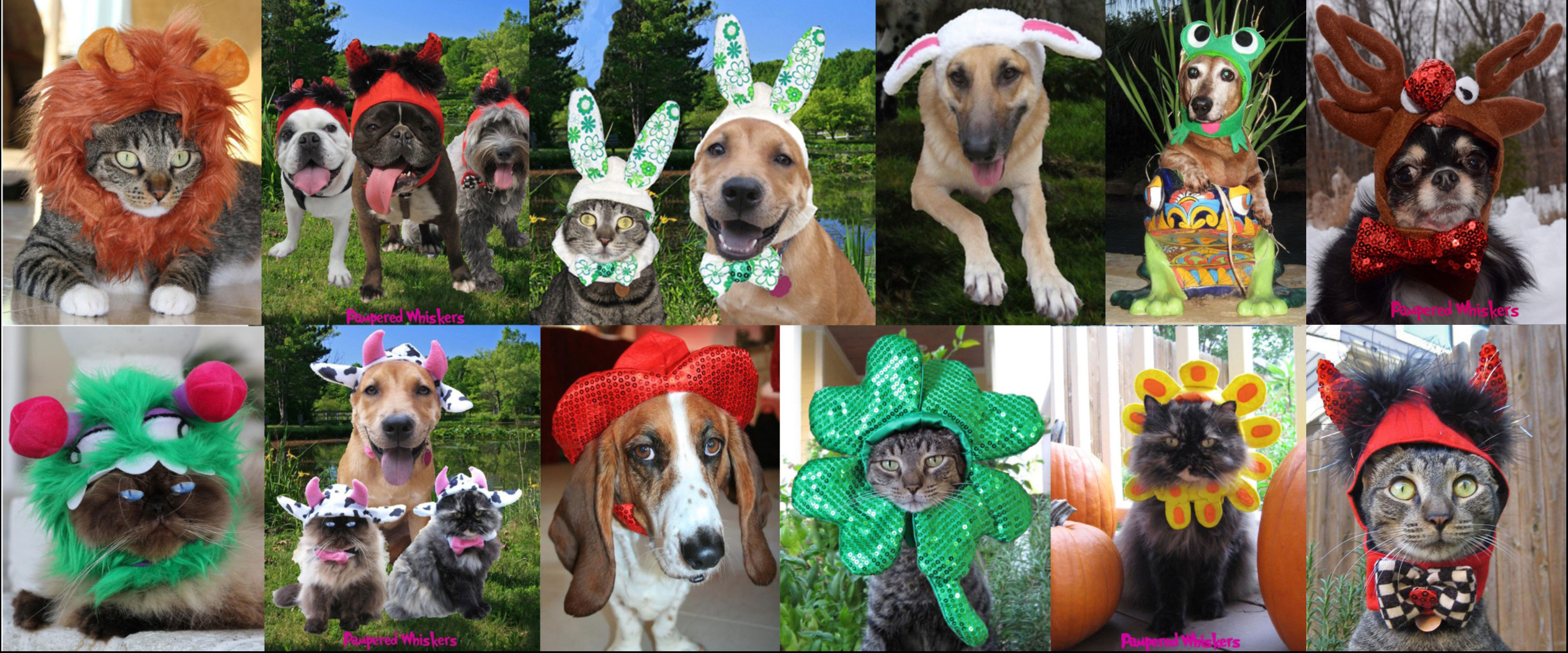 Costume Hats for dogs and cats