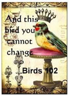 And this bird you cannot change
