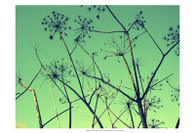Cow Parsley I