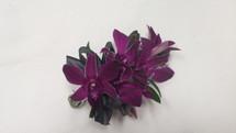 Purple Dendrobium Wristlet Corsage