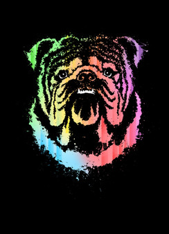 VDD Exclusive Rainbow Bulldog