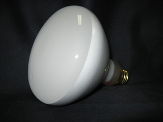 500 Watt Pool Light Replacement Bulb, 120 V