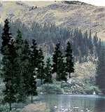 "TR1581 Woodland Scenics Conifer Green and Conifer Blend Colors (4""- 6"" - 24/pkg)"