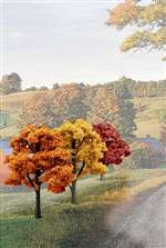 TR1577 Woodland Scenics Ready Made Fall Colors