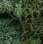 L167 Woodland Scenics Light Green Mix Lichen (Large Bag)
